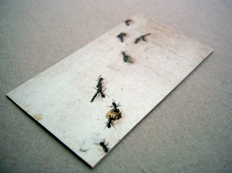 Creative Business Cards - Disinsectant - Ants 2